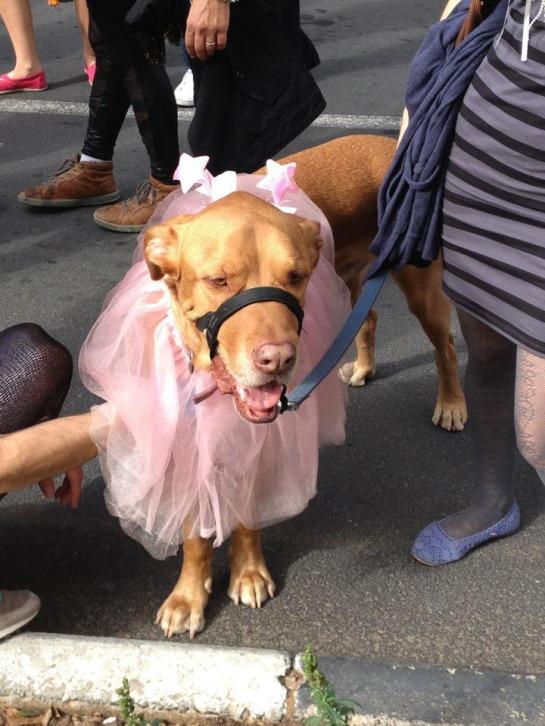 Ballerina dog