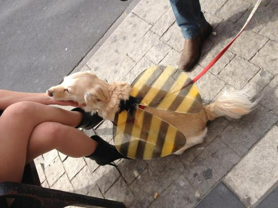 Dog in bee wings