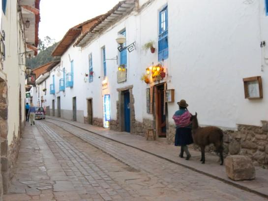 Cusco Llama