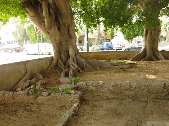 City Garden