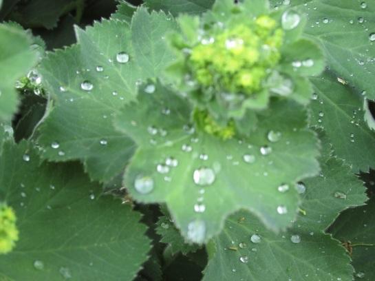 Bit of rain